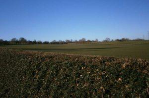 Field in Bramshall