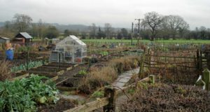 Stramshall Allotments